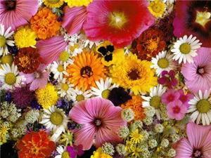 В Глазове пройдет фестиваль цветов