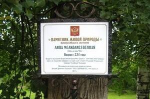 Деревья-памятники в Удмуртии станут объектами паломничества туристов