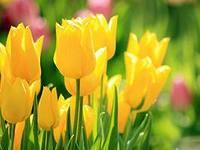 В преддверии Международного женского дня в Ижевске пройдет ярмарка цветов