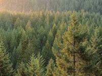 В Удмуртии предложили создать карту усыхающих лесов