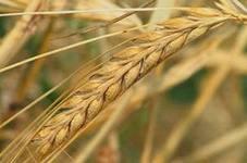 Удмуртия может войти в перечень неблагоприятных для ведения сельского хозяйства