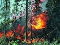 В Удмуртии произошло 50 лесных пожаров