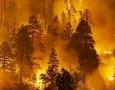 В Селтинском районе выгорел участок лесного фонда