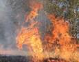 С начала опасного сезона в Удмуртии произошло 10 лесных пожаров